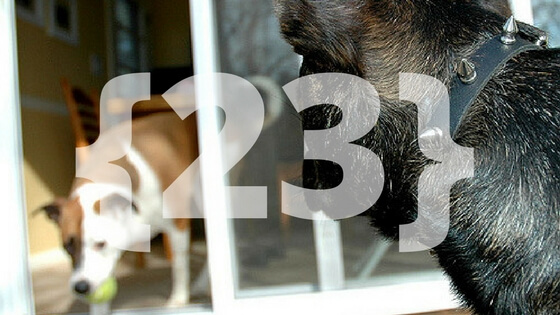 73f76a223fd 23 Amazing Facts About Dogs You Probably Didn't Know