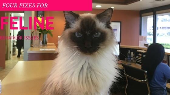 Four Fixes for Feline Behavior Issues