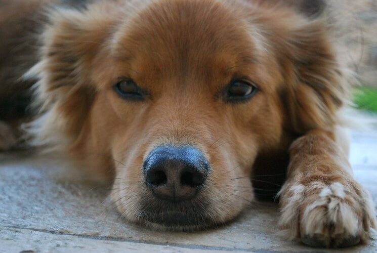 Cancer and Pets: What's the Cause?