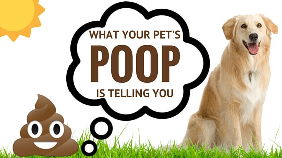 Get the Scoop: What Your Pet's Poop is Telling You