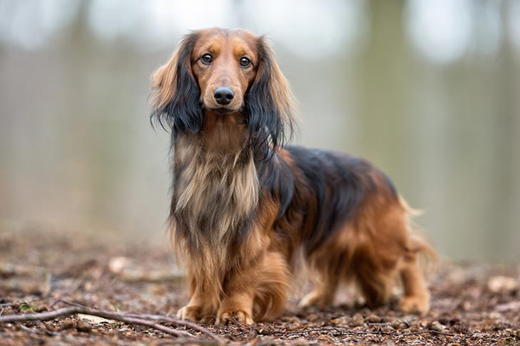 23 hechos asombrosos sobre perros que probablemente no sabías